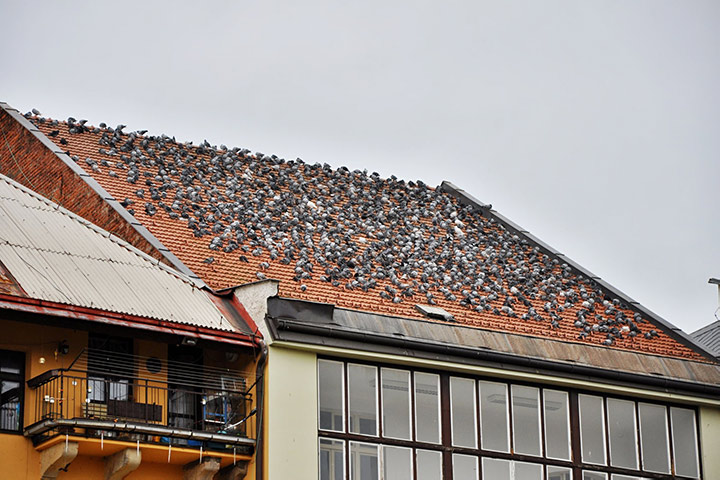 A2B Pest Control are able to install spikes to deter birds from roofs in Stansted.