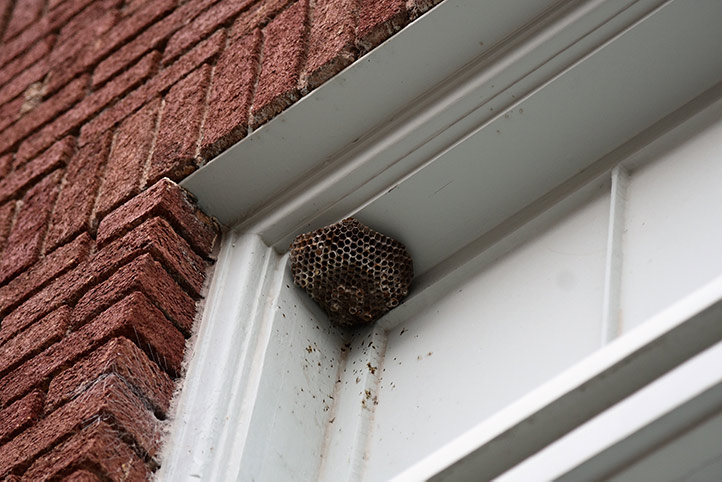 We provide a wasp nest removal service for domestic and commercial properties in Stansted.